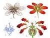 květ je obrazem společenství