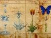 od kapky k motýlu
